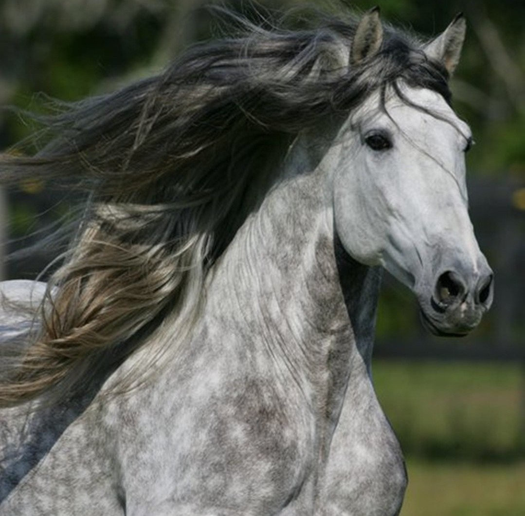 Popular   Wallpaper Horse Silver - 1364578971641  Picture_619510.jpg