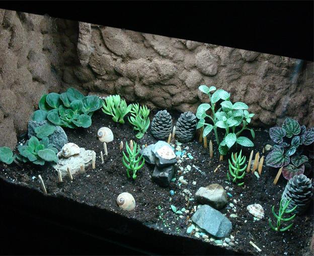 تراریوم زیبای من(kazem aqua)درود به تمام بچه های عشق گیاه اینم تراریوم من چطوره؟