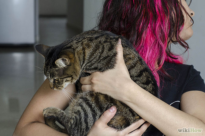 [تصویر:  670px-Deal-With-Being-Allergic-to-Cats-Step-4.jpg]
