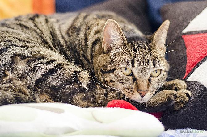 [تصویر:  670px-Deal-With-Being-Allergic-to-Cats-Step-7.jpg]