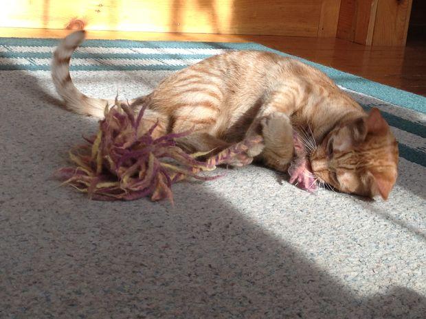[تصویر:  Felted-Cat-Toy-Easy-Free-No-Knitting-Required.jpg]