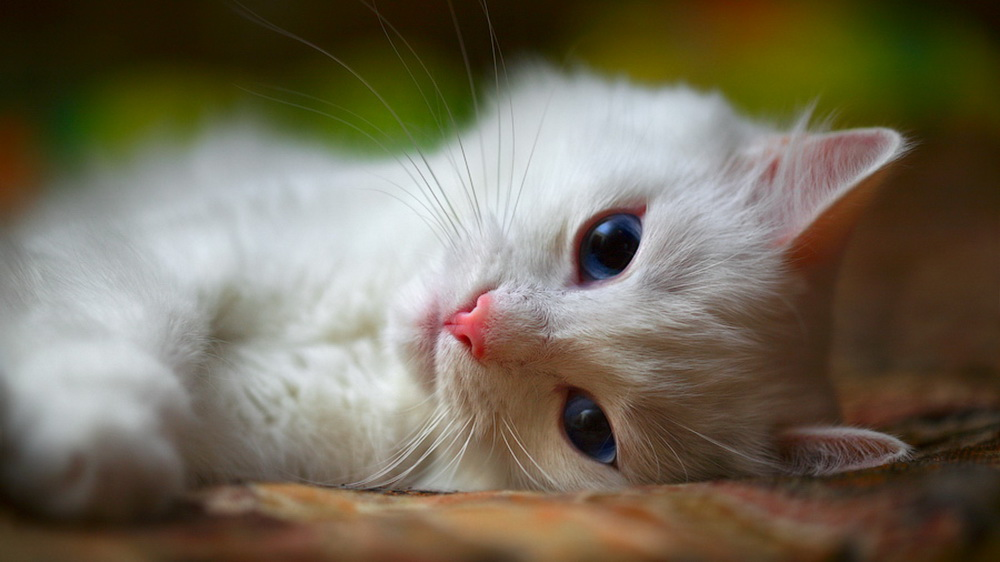 [تصویر:  Free-cat-wallpaper2.jpg]