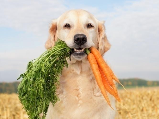 [تصویر:  Vegetarian-Dog.jpg]
