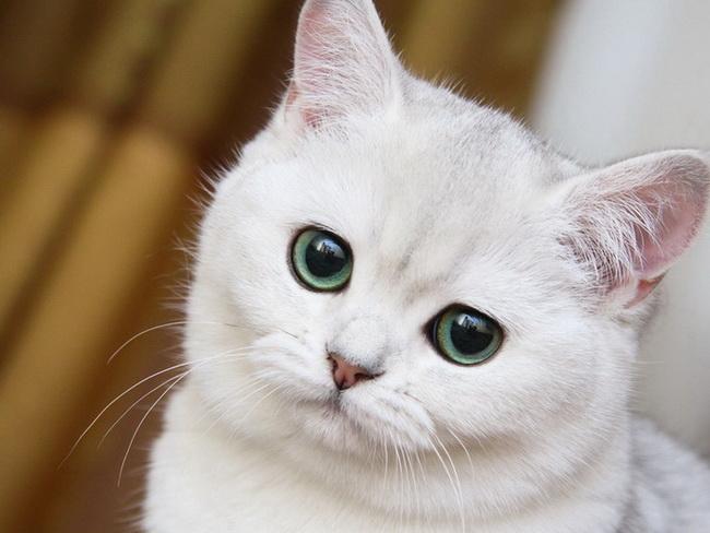[عکس: cat111.jpg]