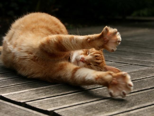 [عکس: cat112.jpg]