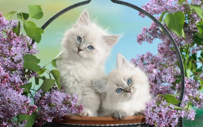 [عکس: cat113.jpg]