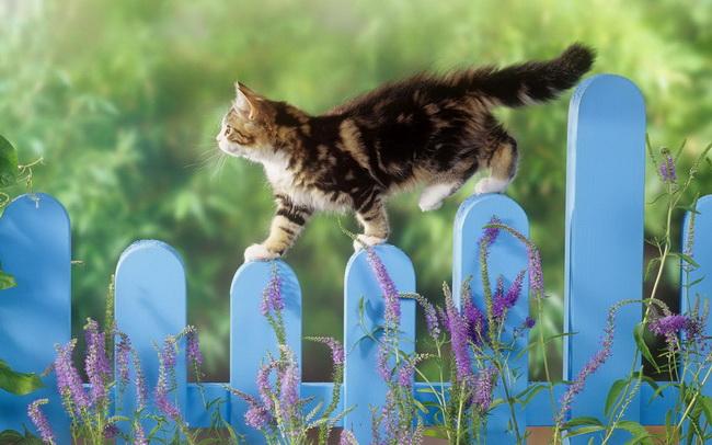 [عکس: cat114.jpg]