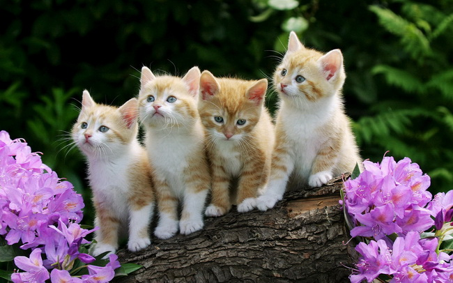 [عکس: cat115.jpg]
