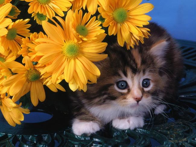 [عکس: cat116.jpg]