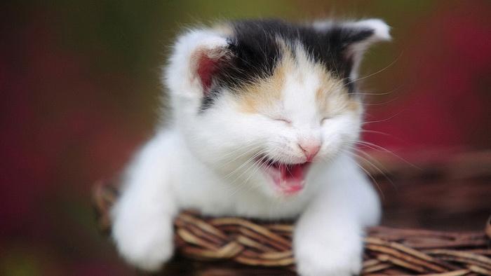 [عکس: cat117.jpg]
