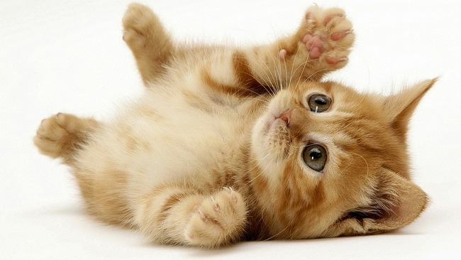 [عکس: cat119.jpg]