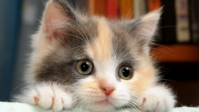 [عکس: cat120.jpg]