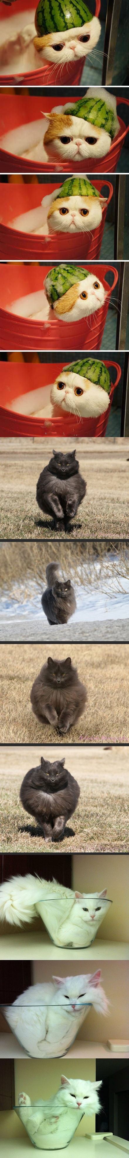 [عکس: cat56.jpg]