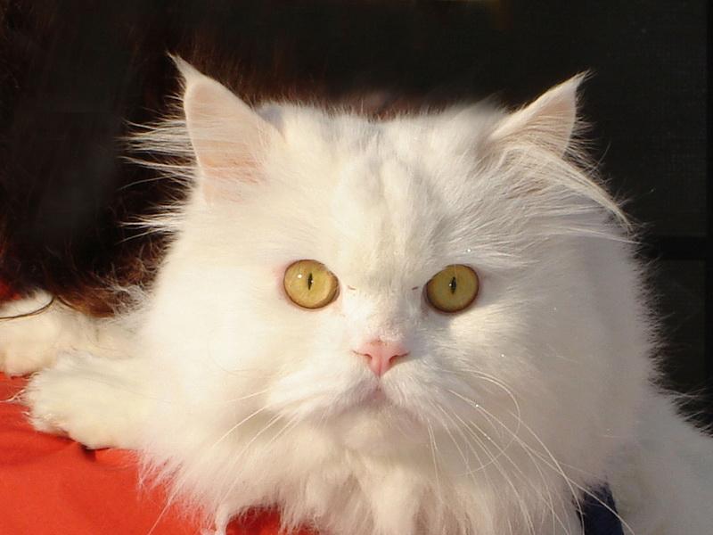 [عکس: cat6.jpg]