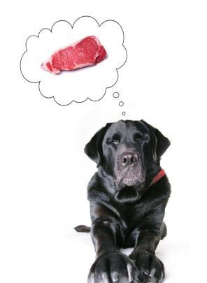 [تصویر:  dog-nutriiton3.jpg]