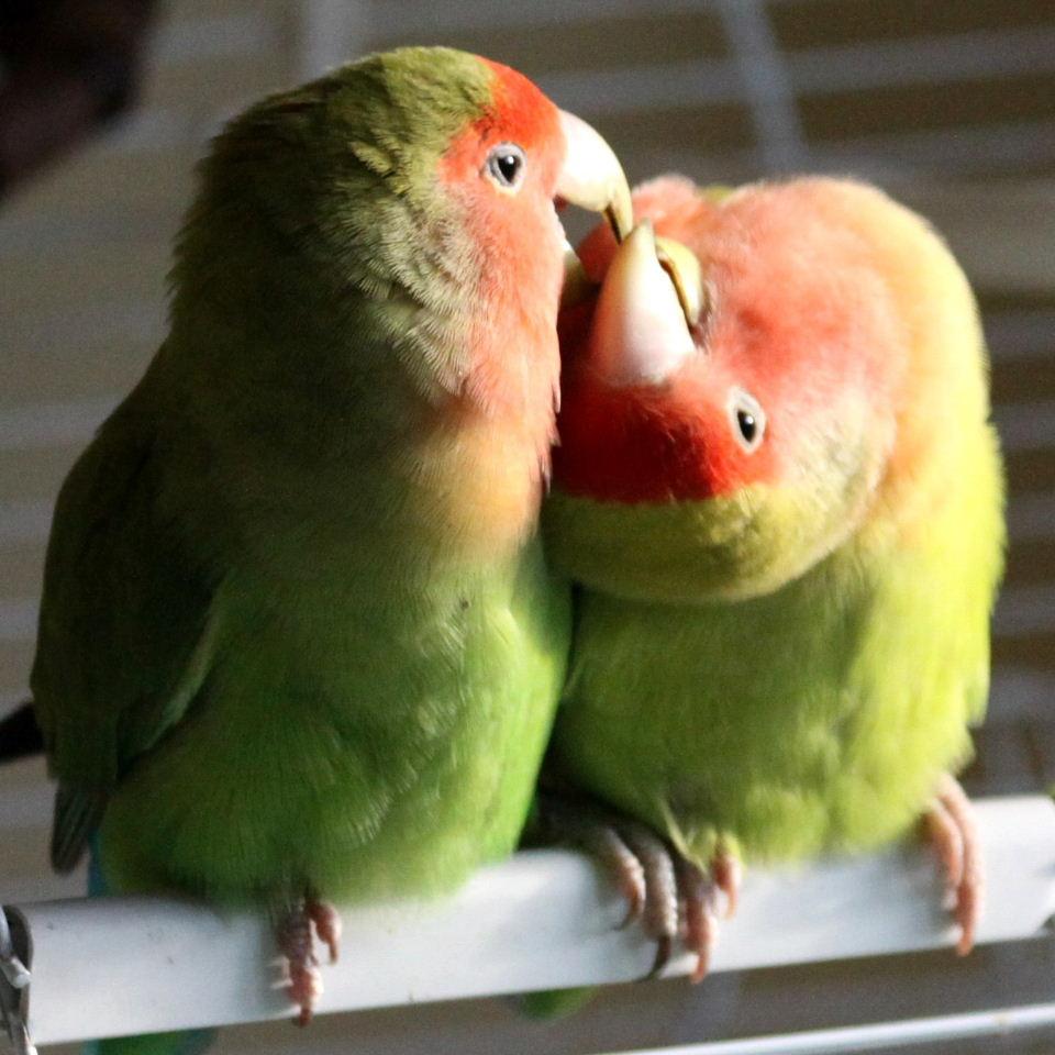 [عکس: kiss1.jpg]