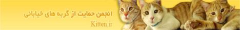 انجمن حمایت از گربه های بی سرپرست