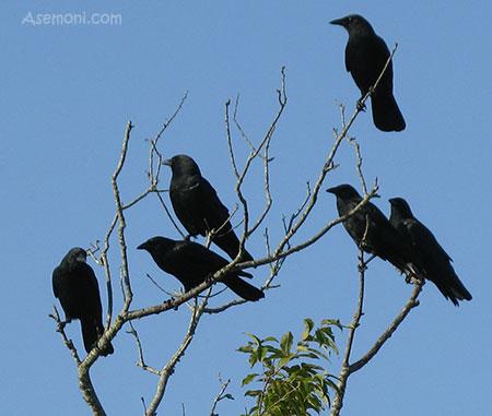[عکس: life-crows-2.jpg]